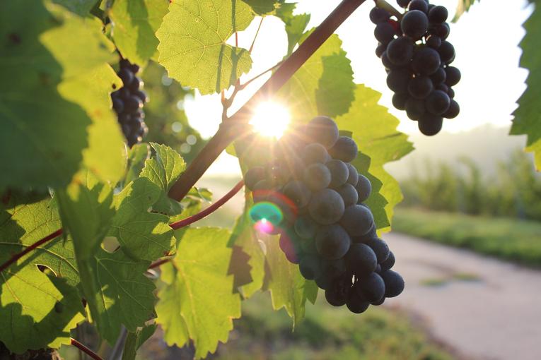 Vine News